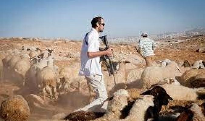 """حوّل مزارع الفلسطينيين لخراب.. """"الاستيطان الرعوي"""" وجه جديد للاحتلال الإسرائيلي بالضفة الغربية، فما هو؟"""