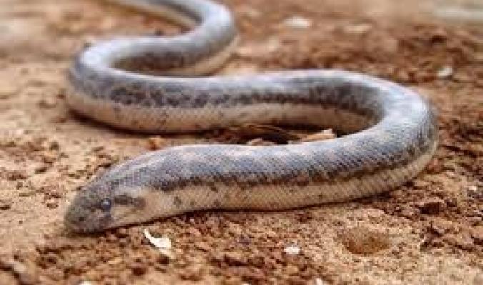 5 حيوانات سامة يمكن لسمومها أن تعالج أمراضًا خطيرة