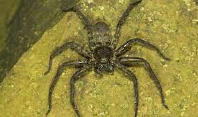 """سم عنكبوت قاتل قد يتحول لدواء يوقف """"إشارة الموت"""".. يعالج النوبات القلبية ويساهم بإطالة عمر البشر"""