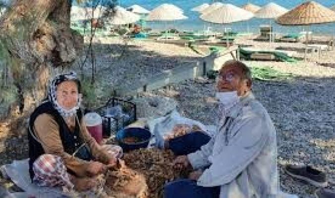 أرض العسل واللوز.. داتشا جنة سرية في تركيا