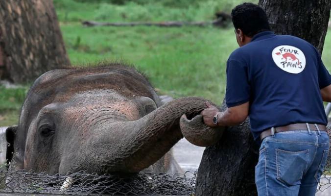 """""""الفيل الأكثر وحدة في العالم"""" يعانق """"الحرية"""" ويحظى بحياة جديدة.. بعد 35 سنة من المعاناة والإهمال في حديقة """"سيئة"""""""