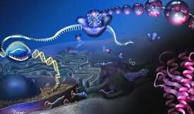 لأول مرة.. العلماء يتمكنون من تصوير فيديو مذهل لآلية طي الحمض النووي الريبي