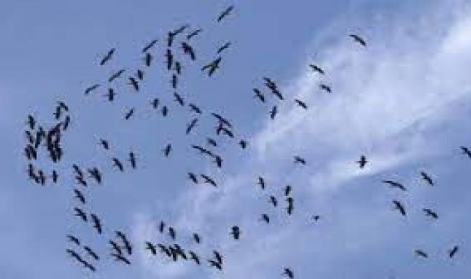 كيف يمكن للطيور أن تتنبأ بالأعاصير وأمواج المد العاتية؟