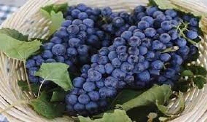 عنقود من العنب الأحمر في اليابان يُباع بـ12700 دولار! ما قصة الفاكهة الغريبة؟