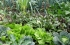 أزمة كورونا تكشف مدى الحاجة لإحياء الزراعة والصناعة المحلية بهدف خلق اقتصاد مقاوم