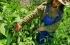مبادرات صديقة للبيئة في زمن الكورونا فهل تستمر؟