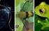 ثمة في الكون ما لا تعرفه.. 6 كائنات سحرية شفافة