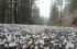 منخفضات جوية أشد برودة أولها بعد اقل من 24 ساعة ونهاية أسبوع شديدة البرودة
