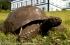 ما سر العمر الطويل لأكبر حيوان بري في العالم؟