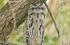 """رغم قبحه.. دراسة علمية حديثة تؤكد: طائر """"فم الضفدع"""" هو الأوفر حظا على إنستغرام"""