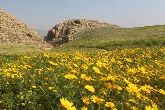 وادي الفيران: المحميّة المنهوبة والمنّسية