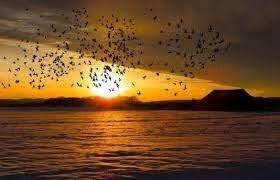 أكثر مما نعتقد.. الطيور تستطيع التعايش مع درجات الحرارة المرتفعة