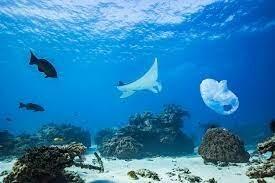 العثور على كائنات غريبة لم يرَ لها مثيل من قبل.. فيديوهات لما صوره باحثون في أعماق المحيط