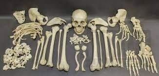 هل تعلم كم عدد عظام جسم الإنسان؟؟