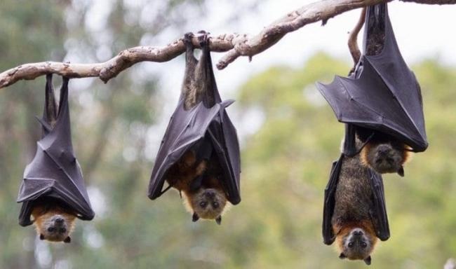 """لحوم """"الخفافيش والكلاب والفئران"""" تغرق الصين.. أسواقها عادت بكل طاقتها"""