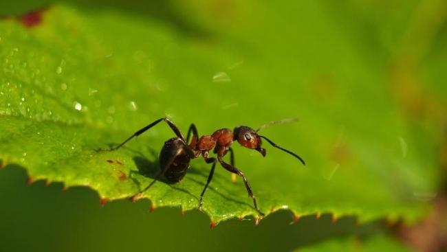 عجائبه لا تنتهي.. النمل يحمي النباتات من 14 نوعا من الأمراض على الأقل