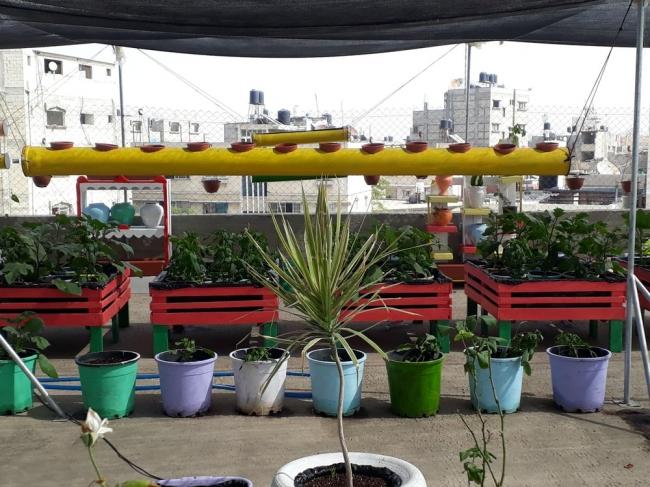 """""""الزراعة الحضرية"""".. مصدر آمن للغذاء وطوق نجاة لمئات العائلات في غزة"""