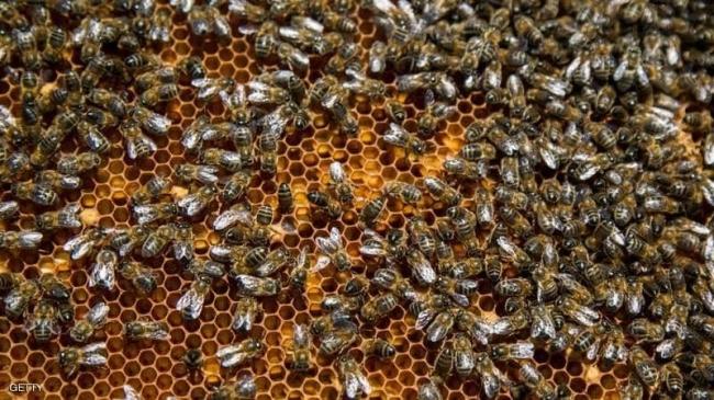 النوم مع النحل...طريقة جديدة لعلاج الأمراض
