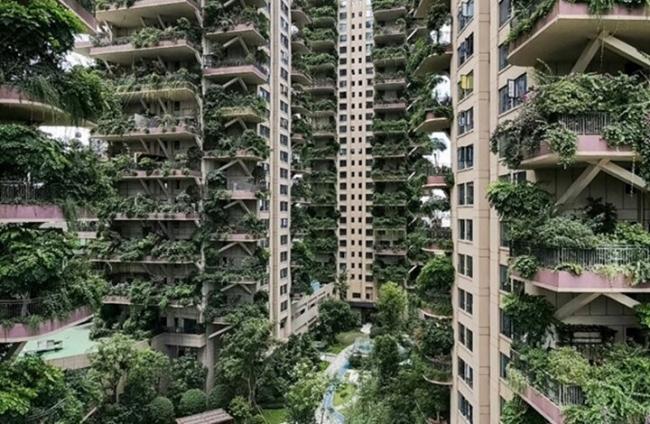 بغياب السكان.. النباتات تستولي على مجمع صيني وتحوله لغابة