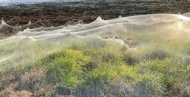 """خيوط """"عناكب نهاية العالم"""" تثير الفزع بأستراليا.. ظهرت على هيئة سُحب بعد موجة فيضانات (فيديو)"""