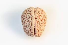 تاريخ موجز للدماغ.. العلماء لم يفهموا تماما كيف تعمل 90 مليار خلية و100 مليون وصلة عصبية
