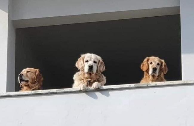 فلسطيني يقيم أول فندق للحيوانات الأليفة بالضفة الغربية