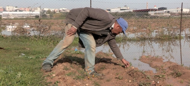 مع الألم أو الأمل مزارعو غزة لا يتوقفون