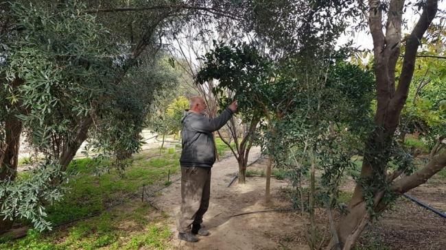 """ما بين النباتات والجولات والأكلات...أشخاص اتخذوا من """"فلسطين"""" أسلوب حياة"""