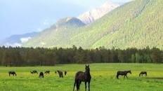 لا يغوينك الحجم... حصان خشبي صغير يرعب خيول ويدفعها للتراجع... فيديو