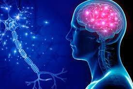 كيف ينمو الإنسان من خلية واحدة إلى 37 تريليون خلية؟