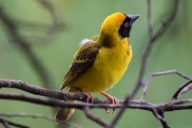 العلماء يكشفون سر اكتساء الطيور بألوانها الزاهية