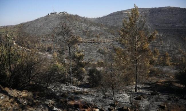 """حرائق جبال القدس: """"ما أخفاه الاستعمار وأظهرته النار"""""""