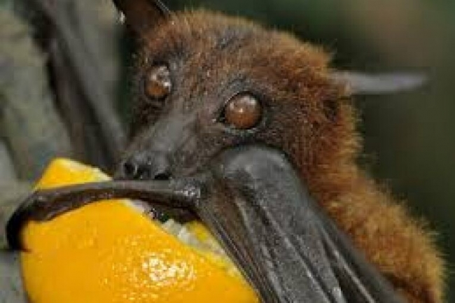 «الخفاش يمص الدم والبرص يبخ سمه في الملح».. 4 خرافات عن مملكة الحيوان
