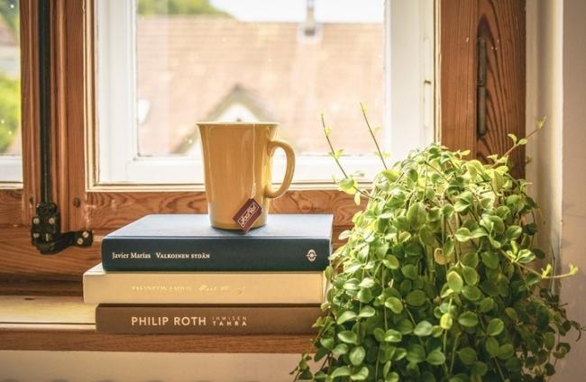 تعرف على النباتات التي تنمو داخل المنزل وفوائدها