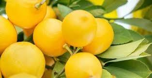 العرب أول من دونوا زراعته ونشروها ويوصف بأسعد رائحة في العالم.. حقائق مذهلة عن الليمون