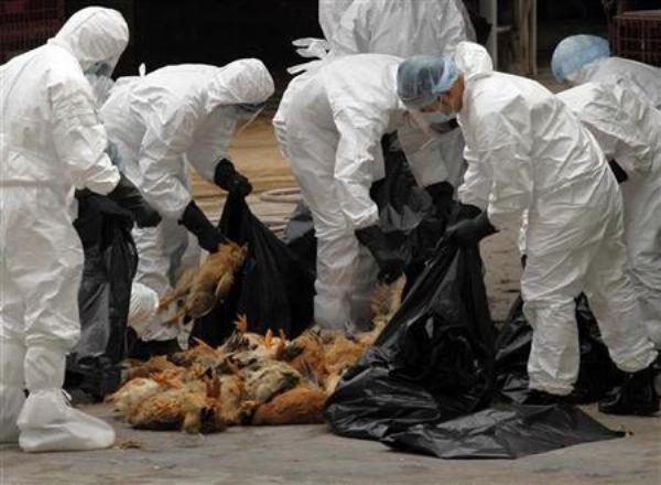 وكالة انباء الصين :حالة وفاة جديدة بانفلونزا الطيور في جنوب غرب الصين