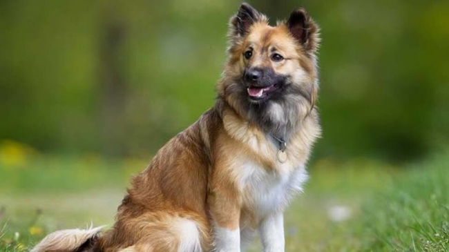 قصة دولة منعت دخول الكلاب إلى عاصمتها 60 عاما